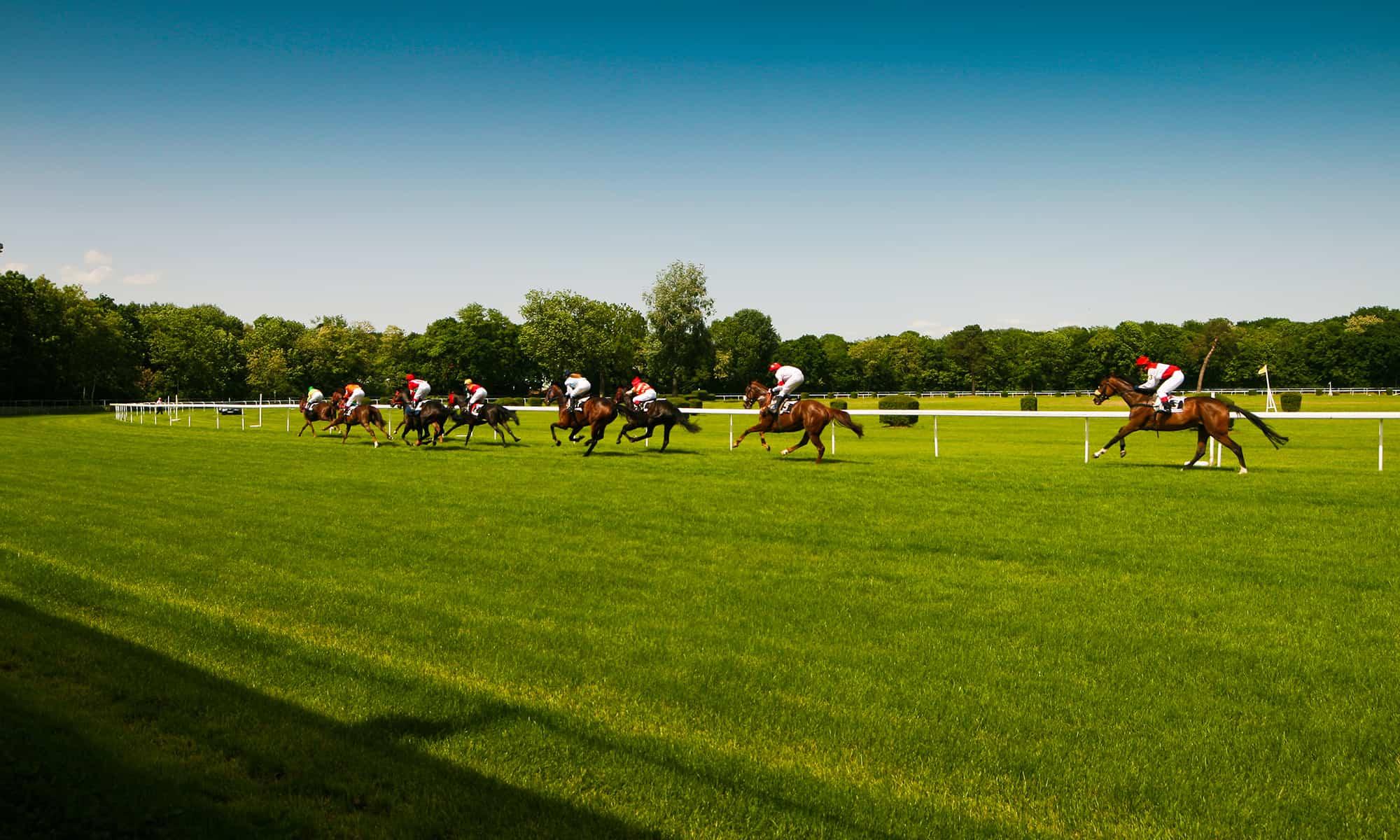 Pferdeversicherung Tiere Rennen