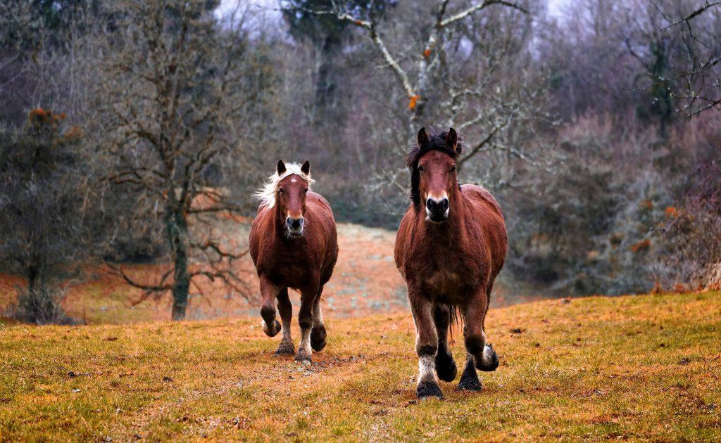 Pferdeversicherung Tiere Bewegung