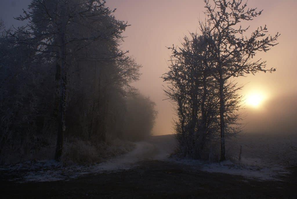 Nebel im Herbst